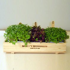 Grow your own microgreens by Marty's Microgreens Salad Packaging, Packaging Ideas, Christmas Cookies Packaging, Seed Raising, Broccoli Sprouts, Sprouting Seeds, Green Business, Business Ideas, Grow Kit