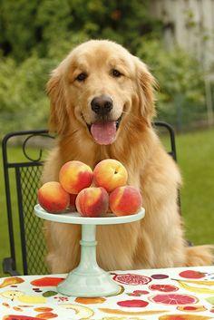 Finn. Peaches and cream