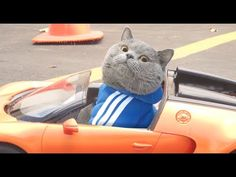 Fast and Furious, the Cats Version