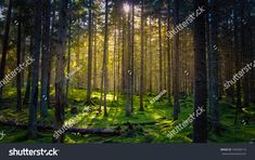 Cozy mossy green forest with warm back-light in the sunset. Stock Foto, Homecoming, Vineyard, Cozy, Sunset, Green, Plants, Outdoor, Inspiration