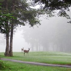 Deer family in the morning haze by Bun_san, via Flickr