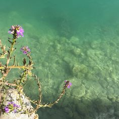 ~ Aquarium, Photography, Goldfish Bowl, Photograph, Aquarium Fish Tank, Fotografie, Photoshoot, Aquarius, Fotografia