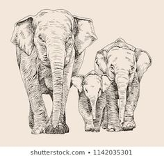 Hand drawn sketch of elephant family walking front view White Elephant Images, Asian Elephant, Elephant Art, Family Sketch, Family Drawing, Family Painting, Elephant Family Tattoo, Elephant Tattoos, Animal Line Drawings