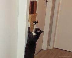 YEAH! DIY: DIY - Arranhador para gatos