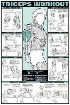 Tríceps.