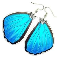 Real Butterfly Wing Earrings (Iridescent Blue Morpho Menelaus Hindwing - E168) - Buy 2 Get 1 Free