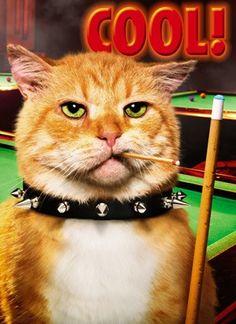 ginger kitties rock!!