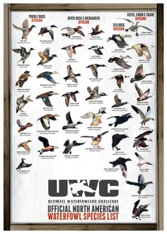 Uwc official north american waterfowl species poster - Ente And Gans Quail Hunting, Deer Hunting Tips, Waterfowl Hunting, Hunting Gifts, Turkey Hunting, Hunting Dogs, Hunting Quotes, Women Hunting, Duck Hunting Decor