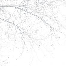Fototapet - Black Beech - Grey
