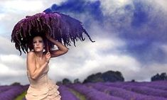 The Lavender Princess: a girl wielding a lavender parasol appears to grow out of a field full of flowers