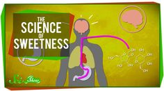 The Science of Sweetness on the Sci-Show, hosted by Hank Green.