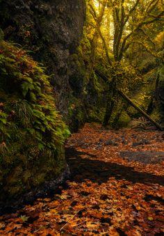 Oneonta Gorge, Oregon; photo by .David Richter