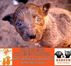 Wahro - World Animal Help and Rights Organisation Info : http://informisten.de/blogs/entry/Wahro-World-Animal-Help-and-Rights-Organisation