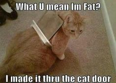 If we had a cat door this would happen to my cat lol