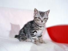 #delicate #cat