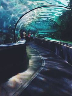 "electric-daisy-forest: ""Aquarium dates are the best dates "" Blue Aesthetic, Aesthetic Photo, Aesthetic Pictures, Aquarium Pictures, Places To Travel, Places To Go, Summer Bucket Lists, Character Aesthetic, Under The Sea"