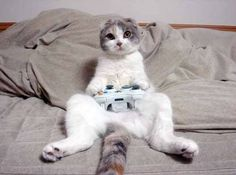 Meow .* http://DubLi.com//T0US19D6X *INCREDIBLE - Get paid to Shop, Travel, Play Music & Play Games
