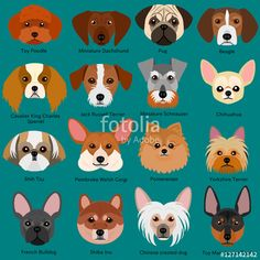 ベクター: small dog faces set with breeds name点