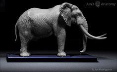 Elephant Anatomy model 1/20th scale v.1 – Jun's anatomy
