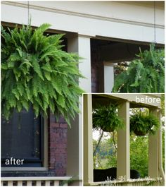 How to have hanging ferns that are the envy of the entire neighborhood
