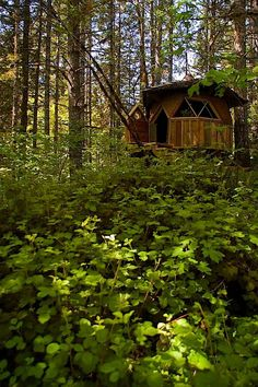 EARTHY DOME HOME. Can you imagine living in an earthy tiny dome home in the woods like this one?