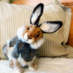 omg adorable  That is the cutest bunny I have ever seen.