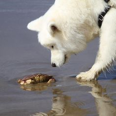 coconutricebear. Hello sir crab. Sorry to be so rube but I don't know which is the appropriate end of you to sniff.