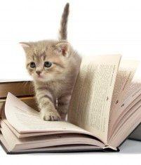 Nederlandstalige kattenboeken. Er is veel op internet te lezen, boeken zijn handig voor als je geen computer in de buurt hebt.