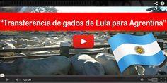 """""""BOMBOU NA WEB"""" Você já viu Gados de Lula sendo transferidos para Argentina? Assista aqui!"""