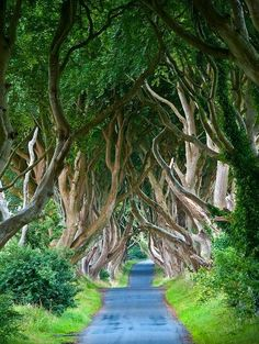 Amazing Snaps: The Dark Hedges, Northern Ireland