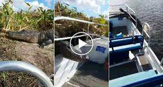 Amigos Vivem Momento Aterrorizador Quando Crocodilo Decide Saltar Para Dentro De Barco