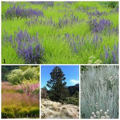 A sea of grasses. garden inspiration. pinterest board of just grasses = adamwoodruff/grasses http://www.adamwoodruff.com/  Some really cool ones, just make sure that whatever you choose is native to your area. If not, they can take over.