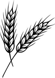 wheat, possible tatoo