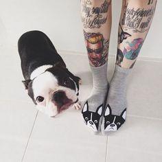 Dog and Socks :)