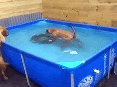 that's perfect #teamwork #dog #gif
