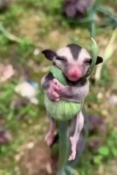 Cute Little Animals, Cute Funny Animals, Cute Dogs, Cute Babies, Funny Dogs, Adorable Puppies, Cute Animal Videos, Funny Animal Pictures, Nature Animals