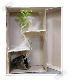 Experimentos infantiles con plantas