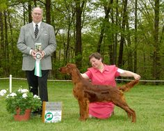 Best in Sweeps, Irish Setter Club of Central Connecticut.