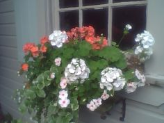 Flowerbox and shutters