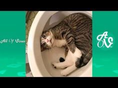 Try Not To Laugh Watching Funny Animals Compilation - Funniest Animals Vines 2019 Animal Pictures To Color, Puppy Pictures, Animal Pics, Mother And Baby Animals, Cute Baby Animals, Funniest Animals, Funny Animals, Funny Cat Videos, Funny Cats