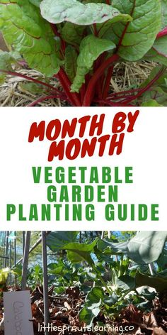 Month by Month Vegetable Garden Planting Guide - Little Sprouts Learning. Do you ever wonder when in the world to plant your vegetables? I'm here to help with my vegetable garden planting guide. garten Month by Month Vegetable Garden Planting Guide Vegetable Planting Guide, Garden Plants Vegetable, Vegetable Garden Planner, Companion Planting, Sprouts Vegetable, Veggie Gardens, Container Vegetable Gardening, Home Vegetable Garden Design, Succession Planting
