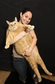This 44-pound kitty made headlines in 2008 after being found wandering around New Jersey. The waistline combined with the beautiful white coat of Princess Chunk -- as she was dubbed -- immediately created a viral hit, leading to an outpouring of attention and adoption requests. Her original owner then came forward, revealing that the feline was homeless because she'd lost her house to foreclosure -- and that Princess Chunk was in fact a boy named Powder.