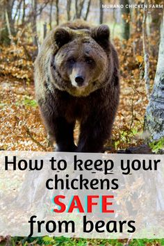 Pet Chickens, Raising Chickens, Chickens Backyard, Fat Pug, Guinea Fowl, Chicken Feed, Big Bird, How To Protect Yourself