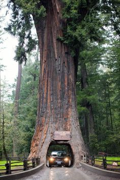 Awesome san francisco to redwood national forest just on travelarize vacations ideas