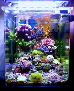 -- A Particular Italian Nano Cube -- - Reef Central Online Community fish aquarium Coral Reef Aquarium, Saltwater Aquarium Fish, Marine Aquarium, Small Saltwater Tank, Coral Reefs, Marine Fish Tanks, Marine Tank, Aquarium Design, Nano Reef Tank