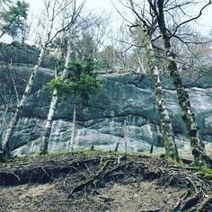 Elfique #elfique #feerique #nature #frequence #forest #bouleaux #trees #jura #sanctuary #forest #rock #walkinbeauty #shamane #spirits #talkwithnature #natureinheart #planetearth #gorgesdecovatannaz #switzerland