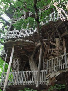 minister builds the worlds largest treehouse treehouse and white oak tree