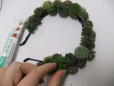 Carefully add more succulents to cover the surface