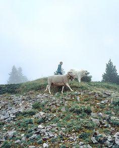 Charlie au col de la faucille avec les brebis Mountains, Nature, Travel, Animals, Family Travel, Naturaleza, Viajes, Animales, Animaux