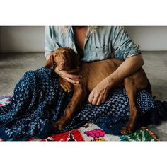 Wirehaired Vizsla #vizsla #puppy #morccocarpet #wabisabi #dog #hound #decor